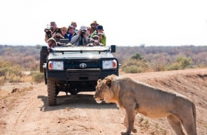 "BikeToursDirect is offering a safari of Namibia by bicycle and train to learn first-hand about ""the greatest wildlife recovery story ever told."""