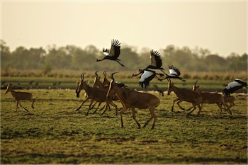 Passage to Africa is inviting solo travelers to join two departures of its safari to Chad's Zakouma National Park.