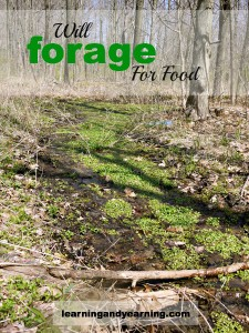 Will-Forage-For-Food