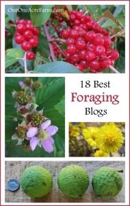 18-Best-Foraging-Blogs-649x1024