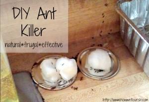 DIY-Ant-Killer-Horizontal