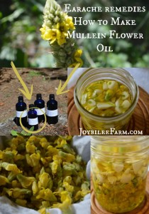 How-to-Make-Mullein-Flower-Oil