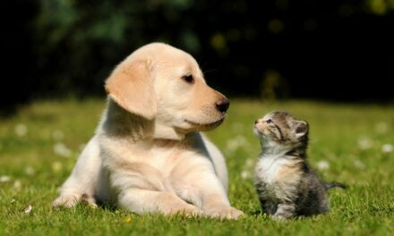 Delayed Opening at Animal Shelter July 12