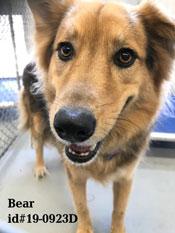 Animal Shelter Pet of the Week