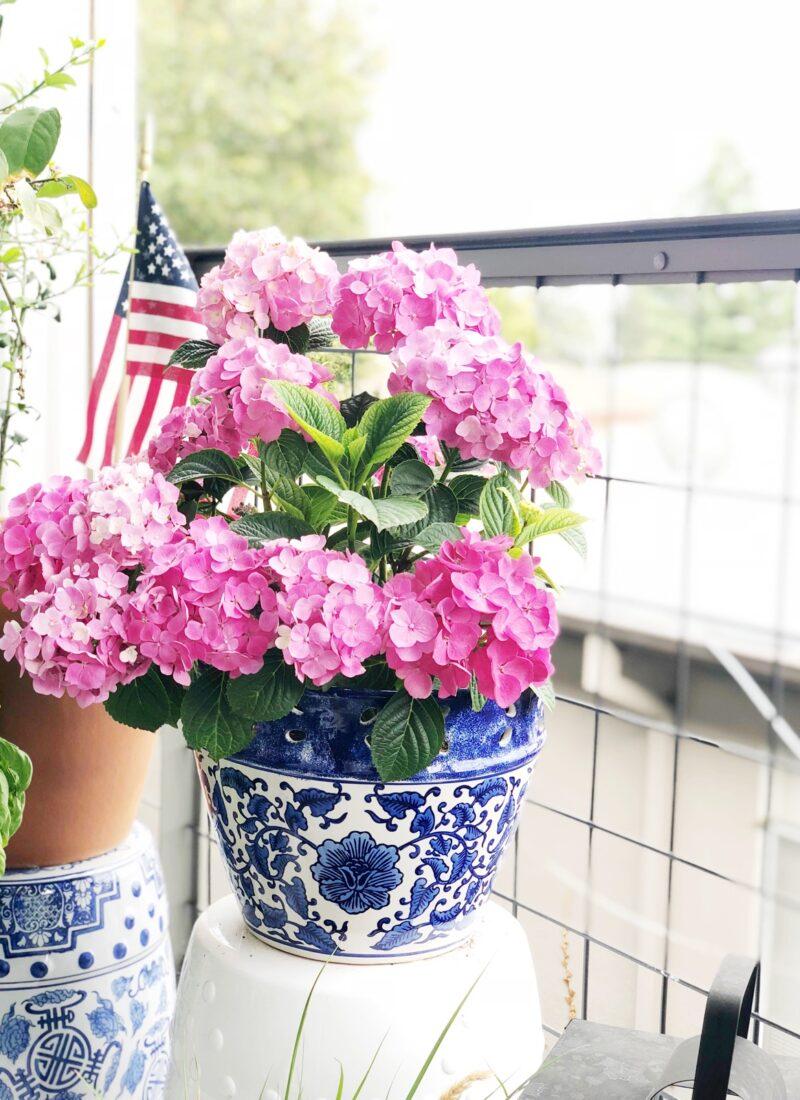 How To Grow Hydrangeas In A Pot