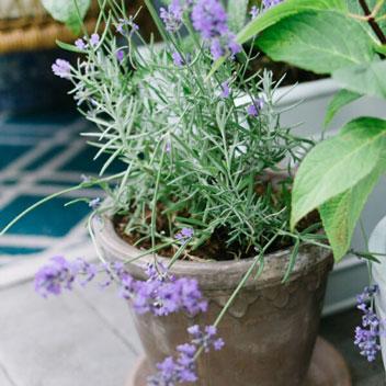 What's In My Urban Garden for Summer