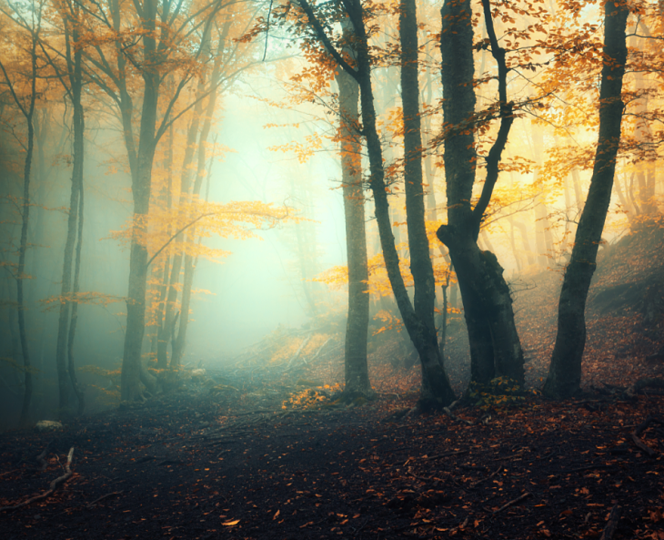 A very foggy forest