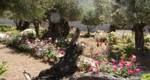 Where is the Garden of Gethsemane Israel Tours