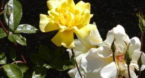 Springtime Flowers Jerusalem Israel Garden of Gethsemane