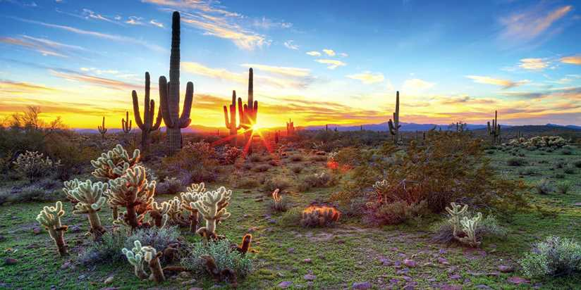 Cacti, Fun, Spa and Beauty in the Sonoran Desert