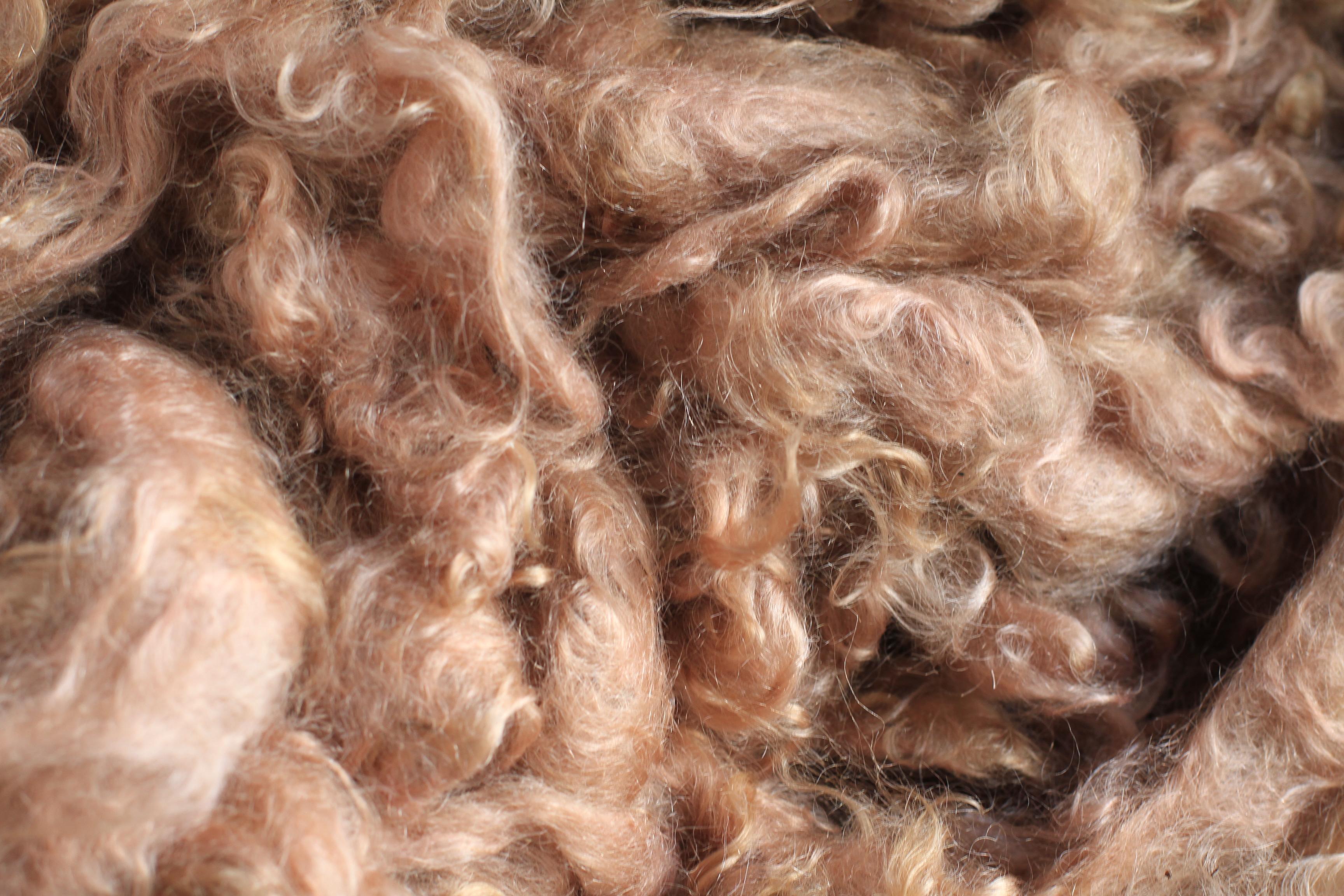 Walnut Dyed Mohair Locks Jan 2014 IMG_6398