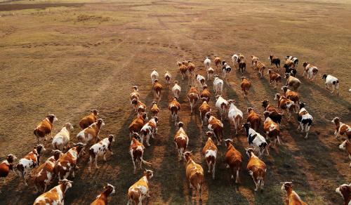 livestock-wildlife