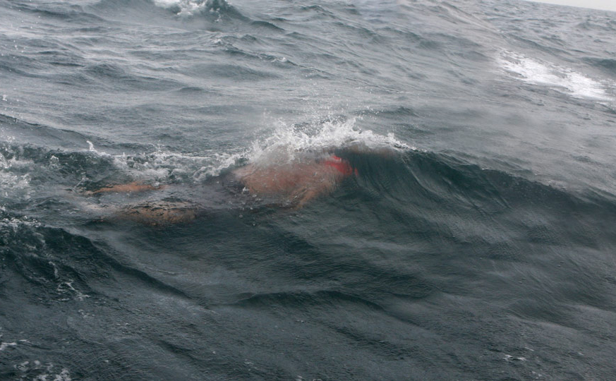 Doug McConnell Swimming the English Channel