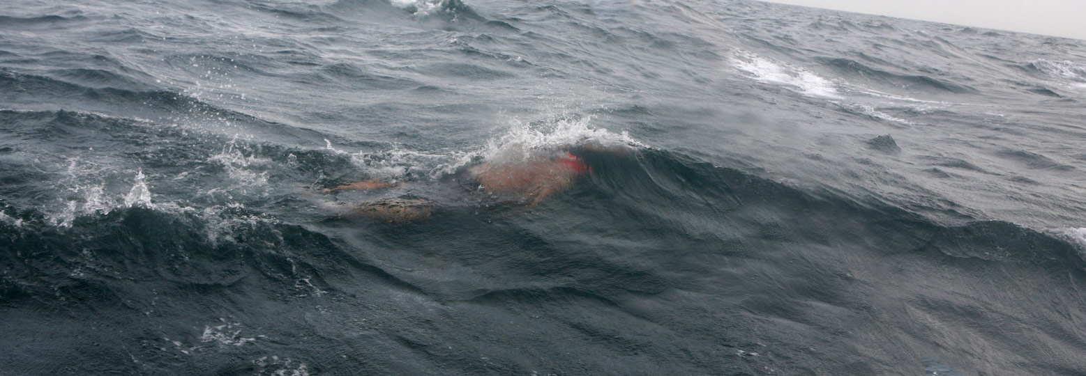 Doug-Swimming