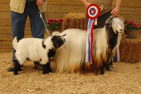 Father and Son Best in Show Winners