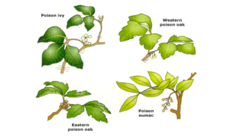 Poisonous Plant Symptoms and Treatment in NE Portland OR