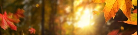 Chisago Lakes Area, MN – LEAF SPECTACULAR – September 1 – 30, 2021