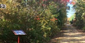 Polk County, WI - FALL COLOR BIKE RIDE/STOWER LAKES TRAIL - October 9, 2021