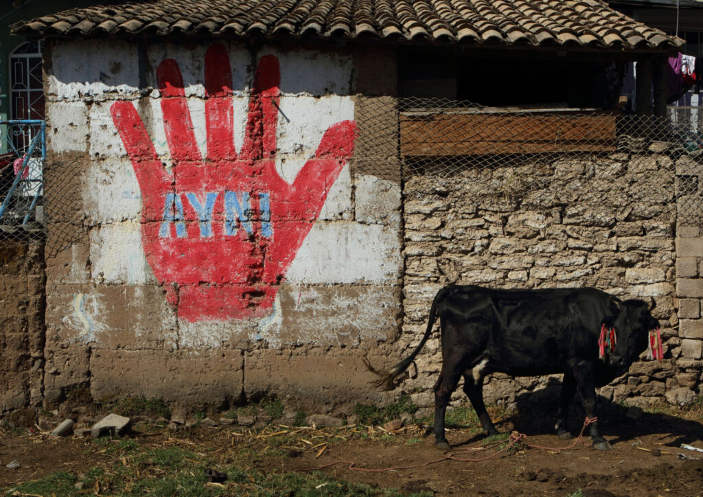 Cow grazes on a small plot of land behind a home in Colcabamba, Peru. The Ayni hand sign is from a recent election. The word Ayni comes from the language of an old native culture called Aymara based in Peru and Bolivia, and it means 'today for you, tomorrow for me.' Ayni is based on the idea of reiprocity: working together as a group for the group, a sharing of ideas and resources, helping one another and having a sense of responsibility for each other.  Amazon Express expedition in Peru August 31, 2012.    Photo by Erich Schlegel