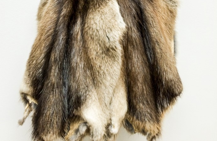 NWT trappers glad to see RCMP keeping fur hats
