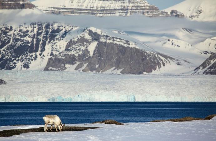 Mercury contaminating caribou lichen on Arctic coast