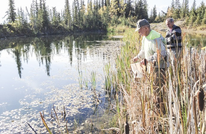 Bombs away! After 30 years of seeding lakes and ponds, NWT wild rice yields a bumper crop
