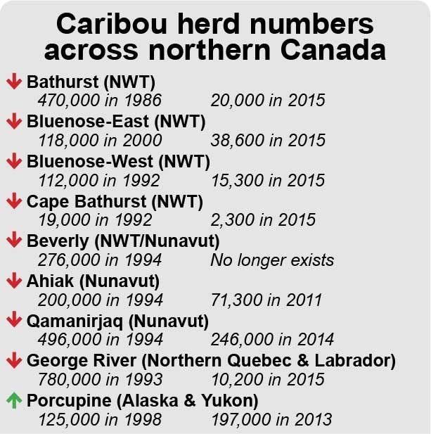 2016_02_24-Caribounumbers