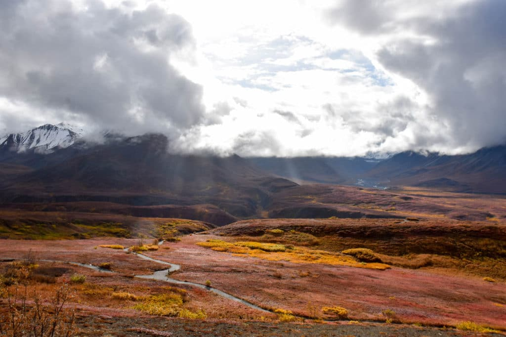 A cloudy day in Denali National Park with fall colors