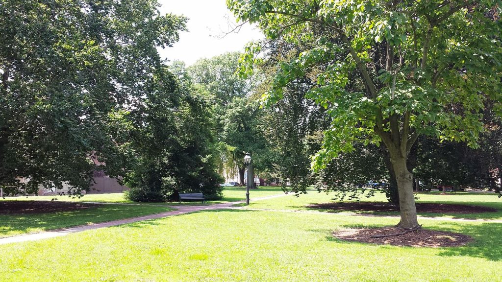 A green grassy park with trees