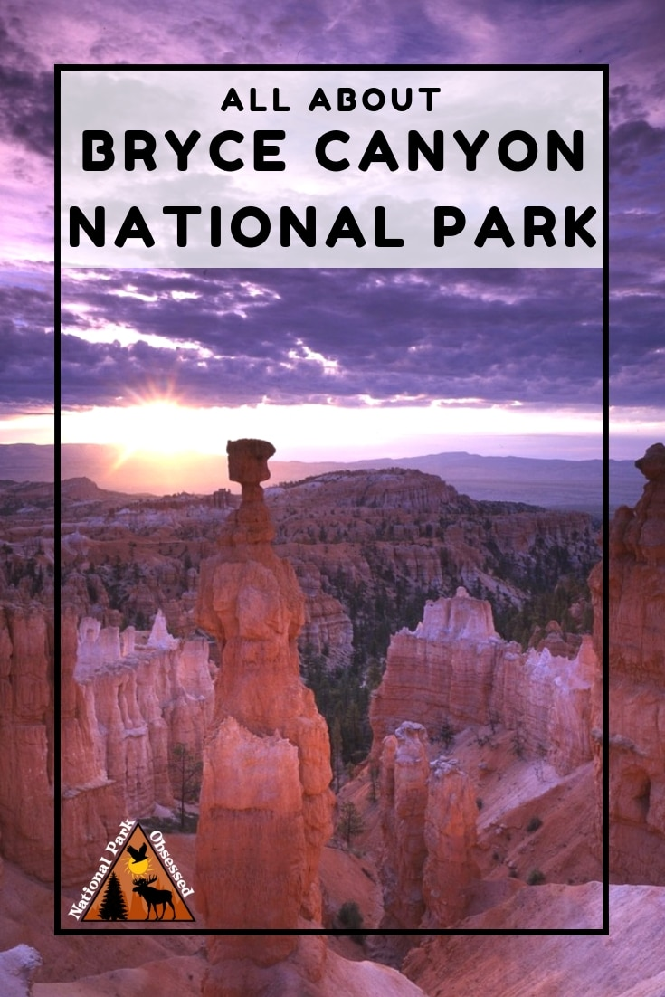 Planning to visit @BryceNPS? Don\'t know where to start. Let #NationalParkObsessed help you plan your trip to #BryceCanyon with guides, itineraries, things to know and much much more #findyourpark #utah #mightyfive #mighty5 #bryce