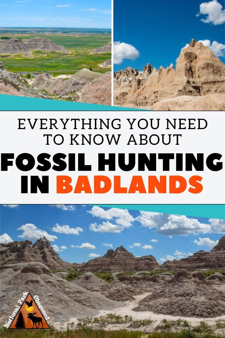 Badlands National Park is one of the best places to find fossils. Learn the tips and tricks for fossil hunting in Badlands. #badlands #fossil fossil hunting near rapid city sd public fossil hunting sites badlands fossil history badlands itinerary badlands vacation badlands vacation