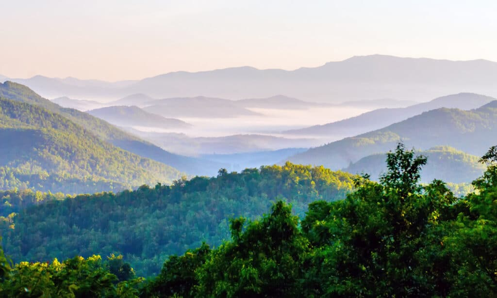 foggy scenic view in Great Smokies