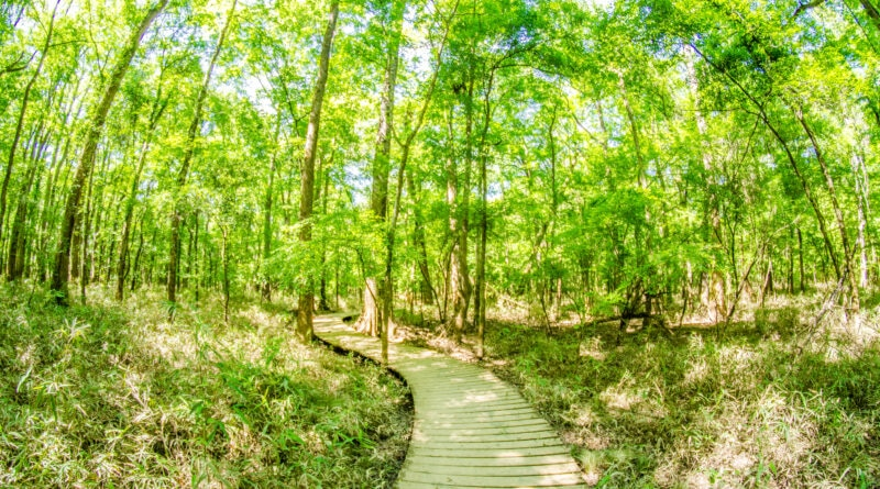 7 Things You Can't Miss on Your First Visit to Congaree National Park