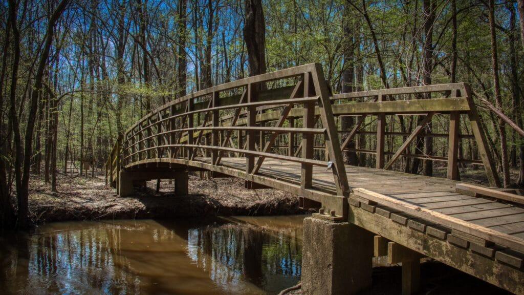 Bridge in Congaree