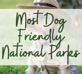 Most Dog Friendly National Parks
