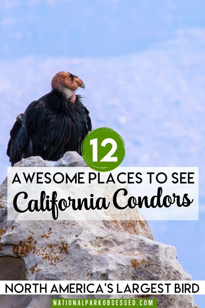 California Condors are one of North American's most endangered and impressive birds. Here are the best national parks to see California Condors.  Pinnacles National Park / Grand Canyon National Park / Zion National Park / Redwoods National Park / Sierra de San Pedro Mártir National Park / Big Sur / Bitter Creek National Wildlife Refuge / Vermilion Cliffs National Monument / Wildlife Viewing / Endangered Animals / Where to See Condors / Where to see California Condors