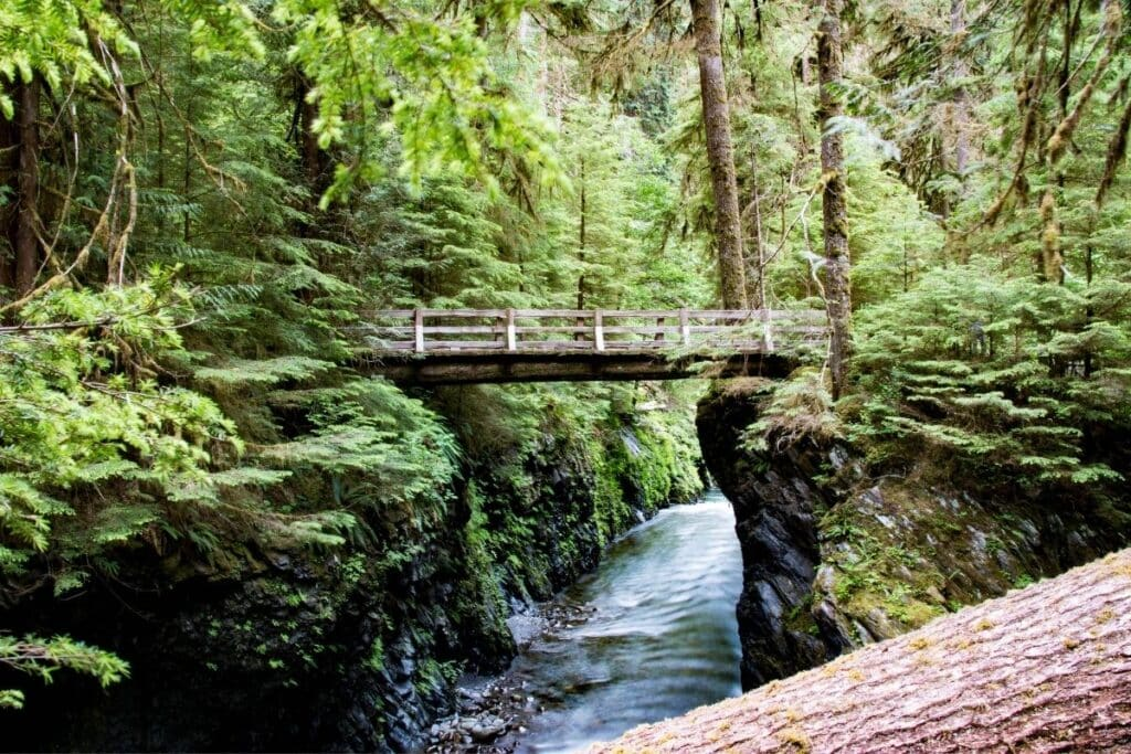 Wood Bridge over water in the bright green forests of Olympic National park