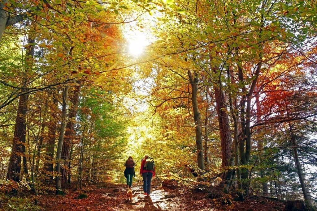 Two people with a dog hiking in the fall with fall leaves (yellow, orange and hint of red.)