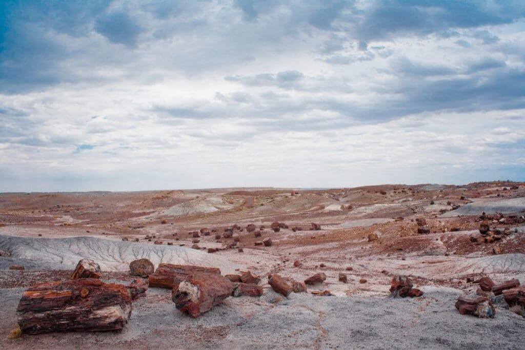 The painted desert with lots of petrified wood.