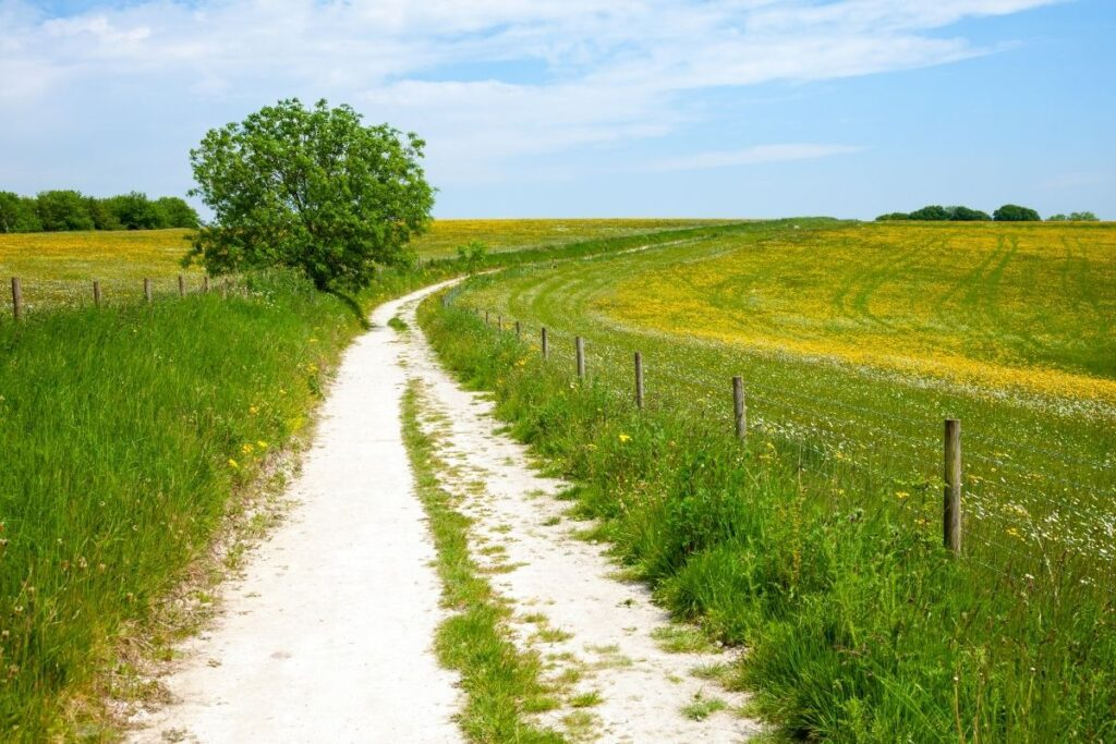 A hiking path through two nice fields