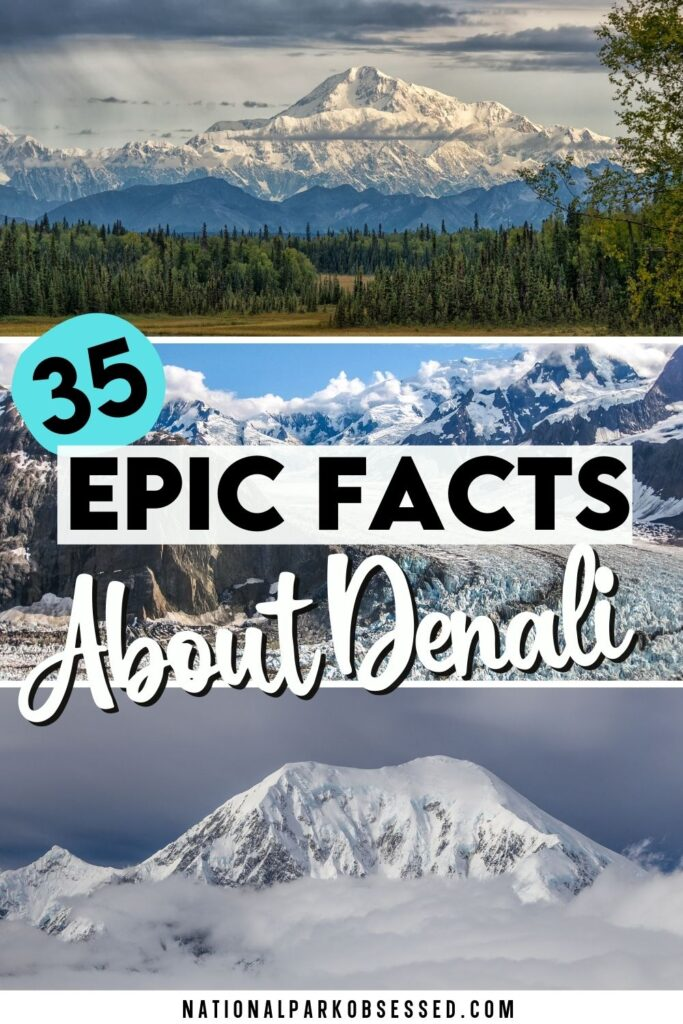 Looking to learn more about Denali and Denali National Park?  These interesting Denali facts and statistics will blow your mind.  facts about mt mckinley/ how high is denali / facts about mount mckinley / height of denali / facts about denali national park / fun facts about mount mckinley / denali height / mount mckinley facts / mt mckinley facts / denali national park facts / height of mt denali / mt denali elevation / height of mt mckinley