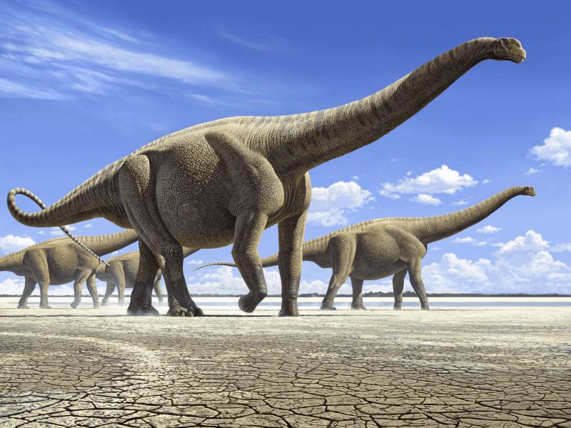 sauropod-montana