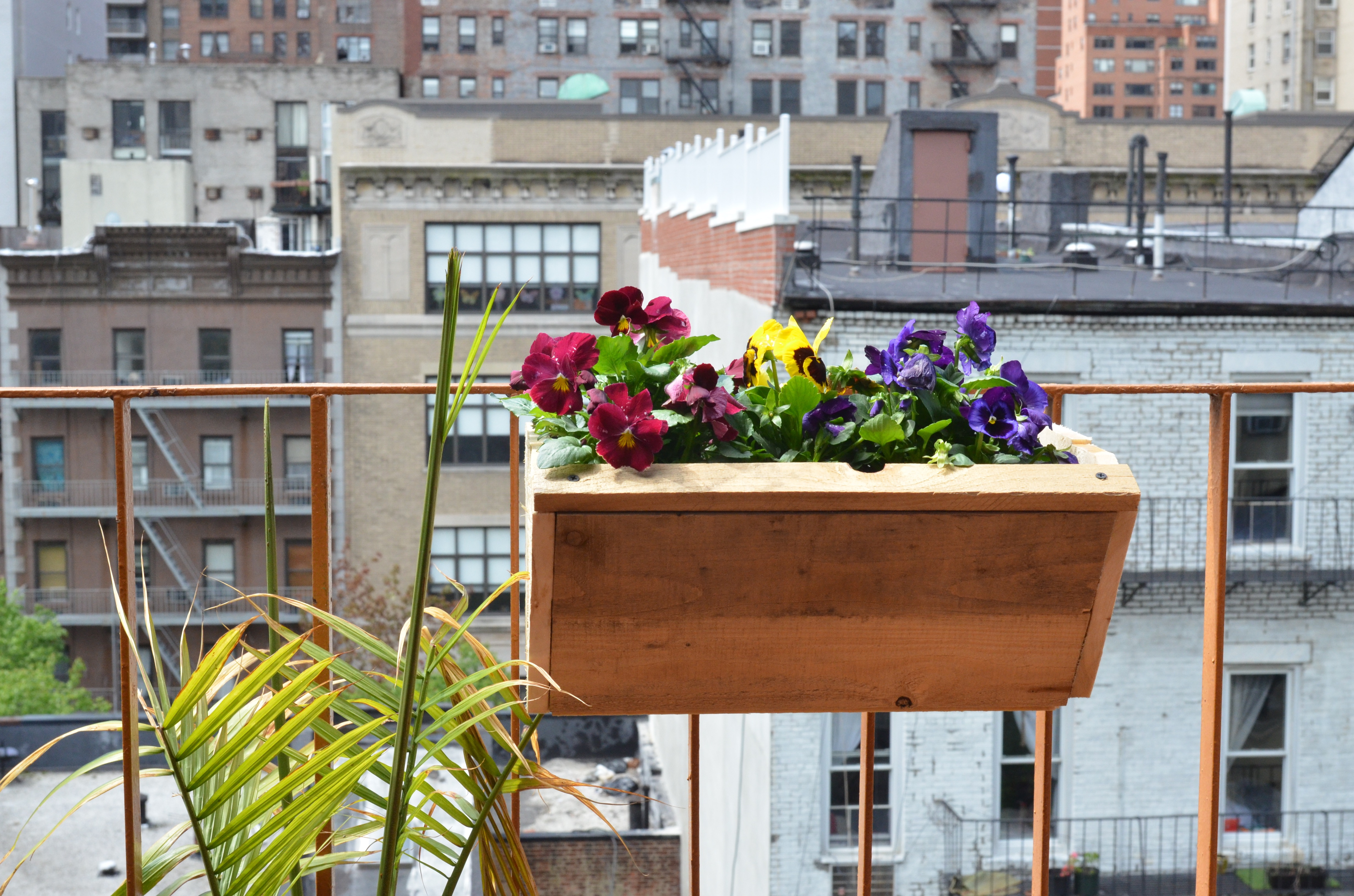 pansies on balcony garden in NYC