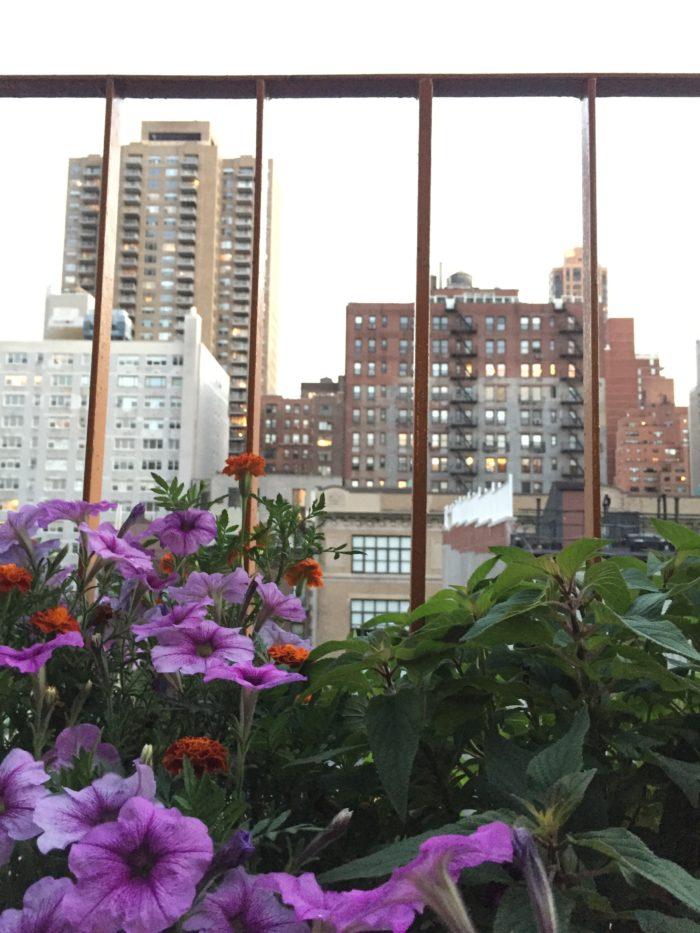 petunias in balcony garden