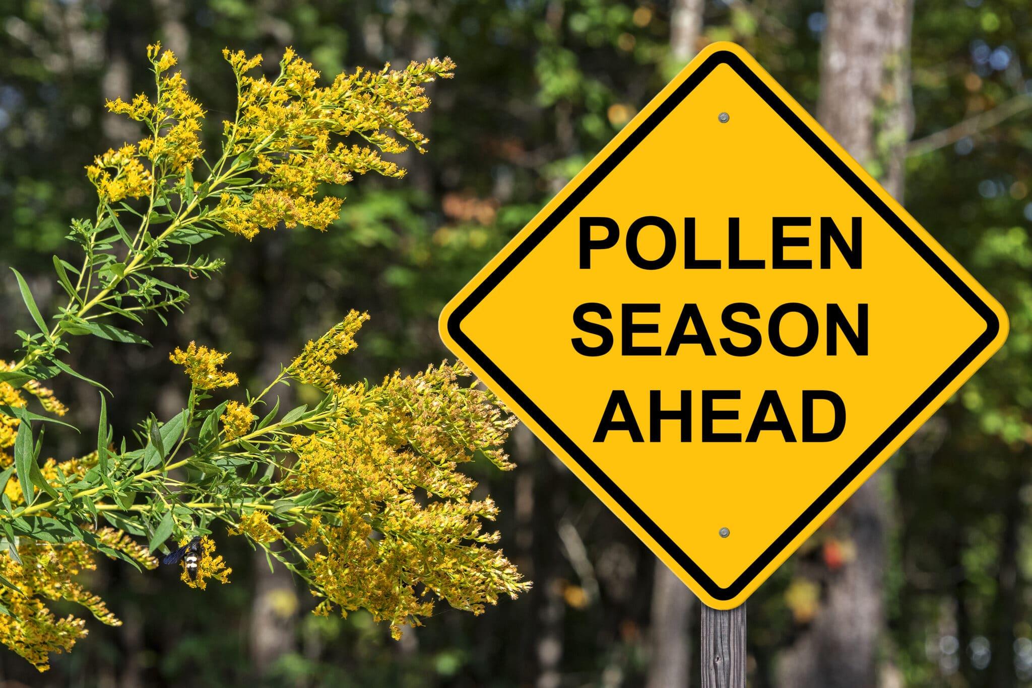 Pollen in Houston