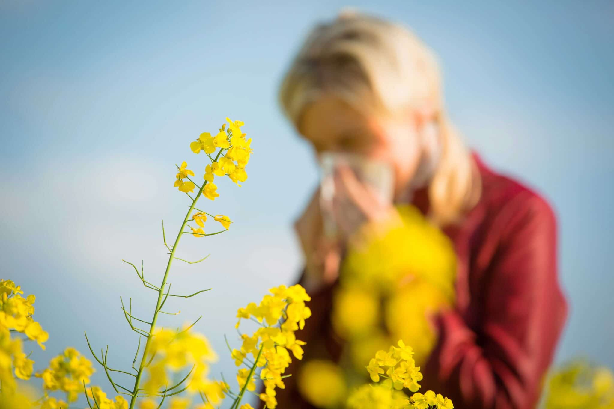 McGovern Allergy and Asthma Clinic Spring