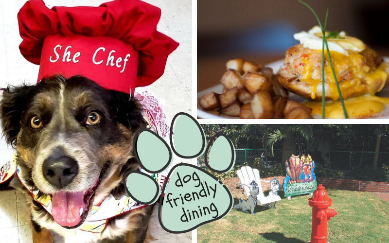 Dog Friendly Dining in Florida - Foodie Travel USA