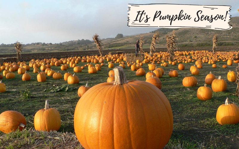 It's Pumpkin Season - Foodie Travel USA