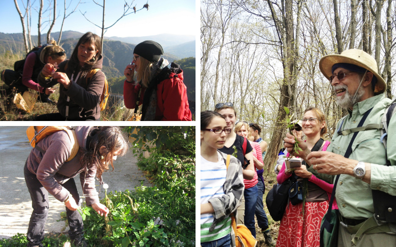 Foraging - Foodie Travel USA
