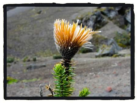 Flora of the Ecuadorian Andes